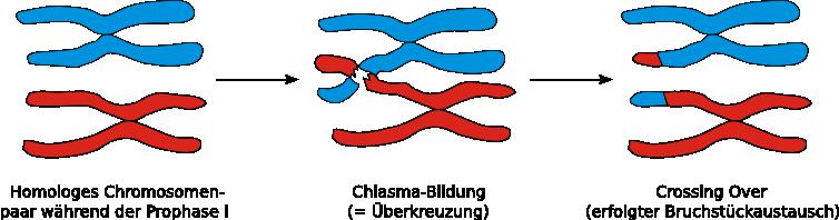 Crossing Over Deutsch
