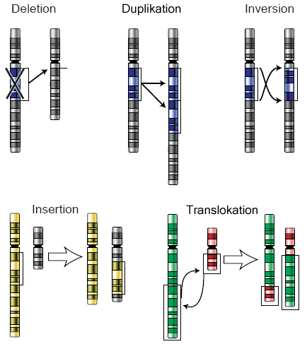 Chromosomenmutation