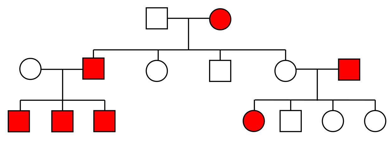 Wunderbar Genetische Stammbaum Vorlage Bilder - Entry Level Resume ...