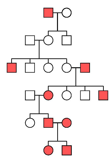 stammbaumanalyse wikipedia. wie im stammbaum schon auffllt sind ...