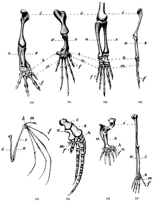 Freies Lehrbuch Biologie: 12.01 Evolution der Tiere und Pflanzen als ...